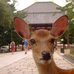 奈良のイクメン日記を書いていきます!