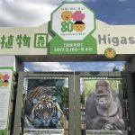 東山動物園のイケメンゴリラ シャバ―二は名古屋で有名