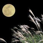 お月見の意味と由来 こどもに簡単に説明する