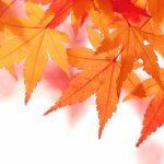 紅葉狩りを京都で楽しむ時期と見ごろ
