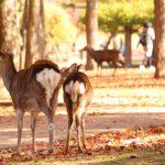 奈良公園の紅葉の見ごろと時期
