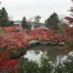 永観堂の紅葉とライトアップの拝観料