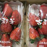 イチゴは栄養の高い果物として人気!その効果とは??